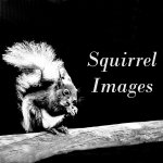 Squirrel Images / Greetings cards and photographic prints