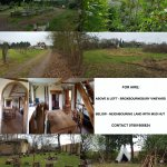 Vineyard and Mud Hut for Events / Land to Hire for workshops /events