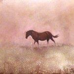Horse & Meadow