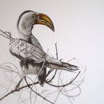 desiree hart / Wildlife Artist